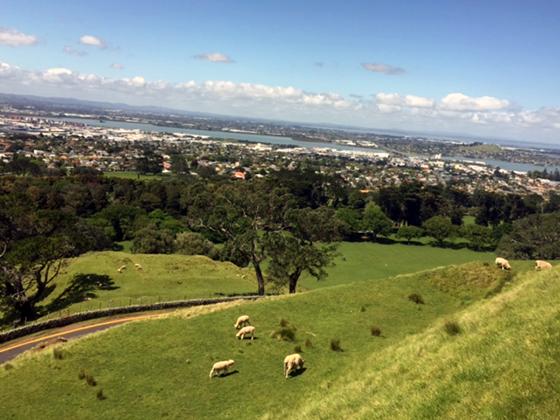 My Photos of North Island, New Zealand
