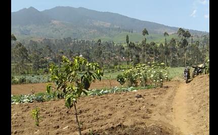 Pertania Padulang Primadona Yang Terabaikan Di Situ Cisanti