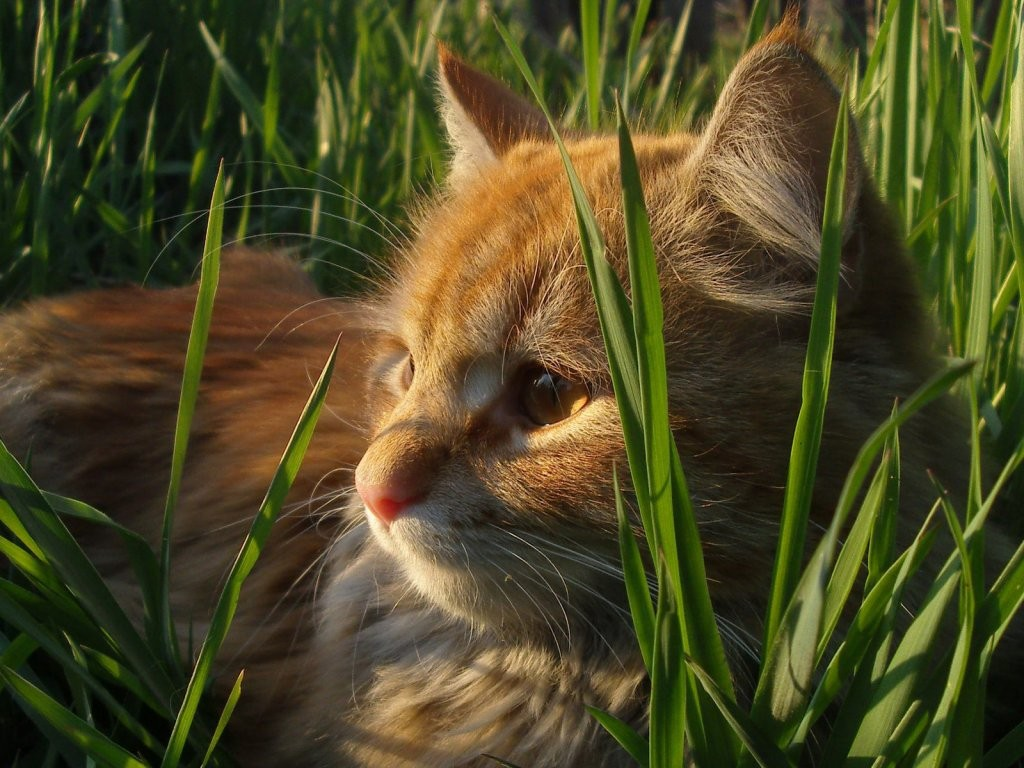 HD Wallpapers and Backgrounds of animals and pets: Foxes, Horses, Tiger, Dogs, Cats, Squirrels, Rabits and Others