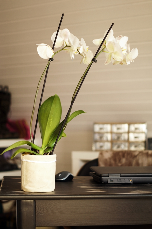 Blog + Fotografie by it's me! - fim.works - FotoBüro, weiße Rispen-Orchidee