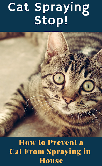 How to Prevent a Cat from Spraying in House