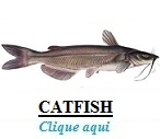 http://www.nodepesca.com.br/p/peixe-catfish-nodepesca.html