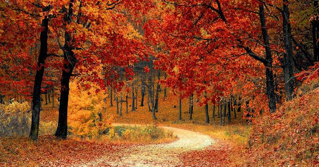 suplementy na jesień