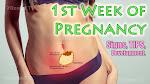 Pregnancy - Week By Week (Fetal Growth Week 1 to 40)