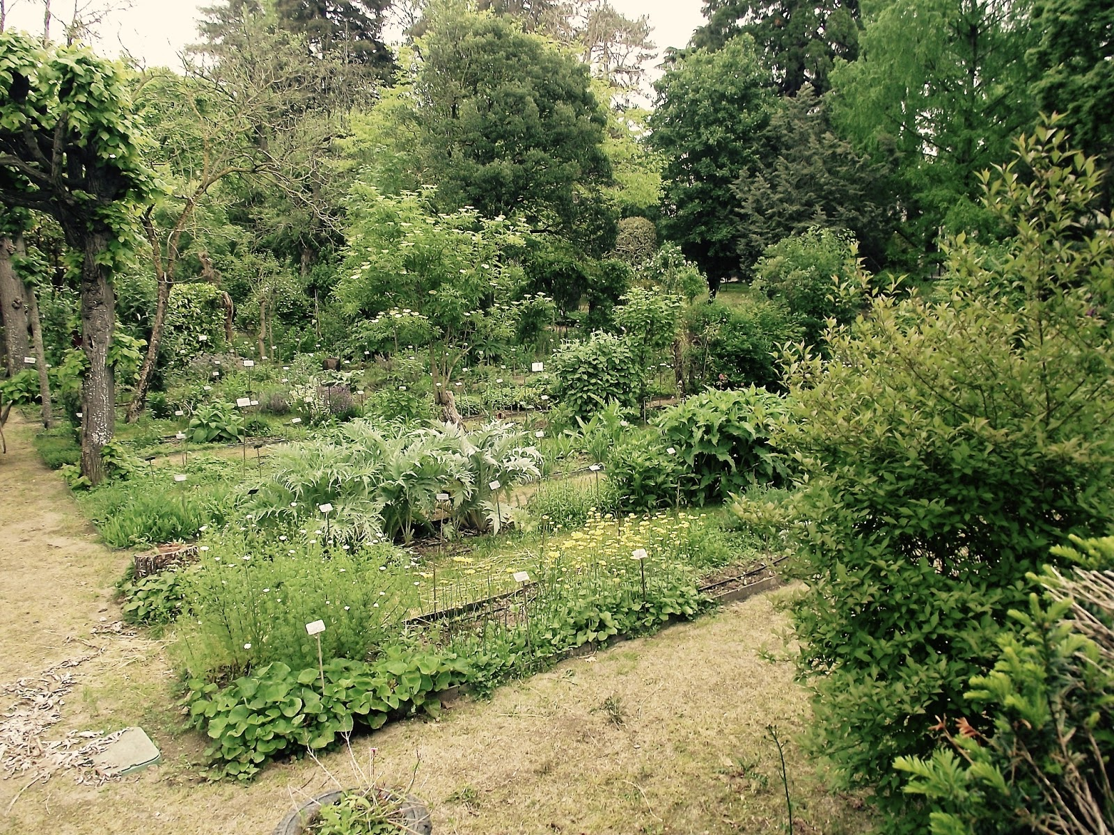 le jardin botanique de la facult de pharmacie d 39 angers le plaisir du jardin. Black Bedroom Furniture Sets. Home Design Ideas