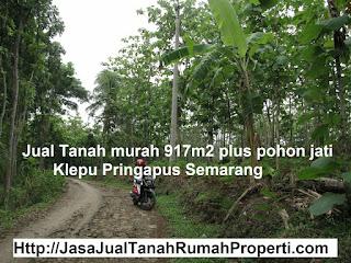 Jual Tanah 917m2 + pohon jati di Klepu Pringapus Semarang