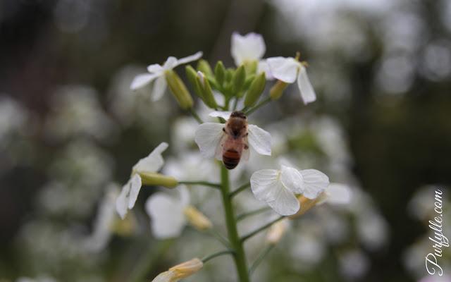 bee hard at work
