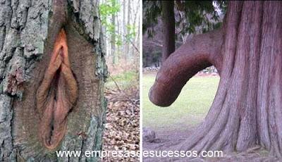A natureza com duplo sentido