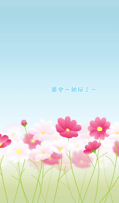 Flowers -cosmos2-