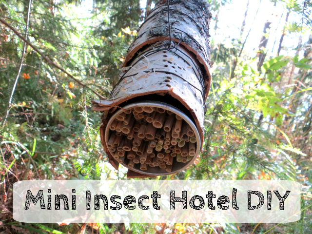 insect hotel diy