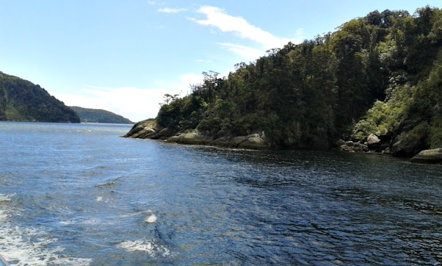 milford-sound-cruise-tasman-sea