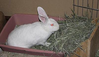 tempat beranak kelinci