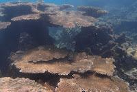 karang coral karimunjawa jepara