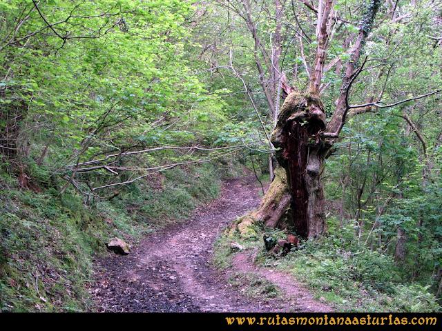 Ruta La Collada Monsacro: Bosque en el camino