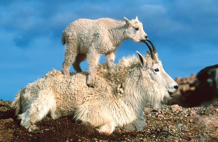 Fotos De Animales Salvajes Para Fondo De Pantalla: IMAGENES FOTOS PAISAJES Y MAS PARA FONDOS Y DIAPOSITIVAS
