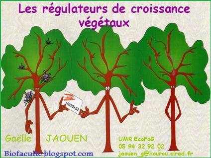 Les régulateurs de croissance végétaux PDF