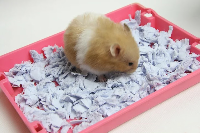 Membuat Alas Kandang Hamster dari Kertas