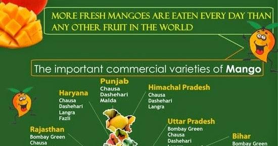 Ultra high density mango plantation
