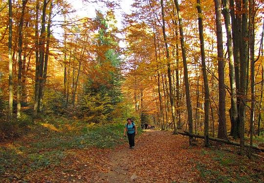 Las zachwyca jesienną kolorystyką.