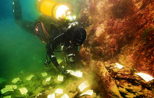 Second campaign of excavations completed on Roman wreck carrying tin ingots off the coast of Brittany
