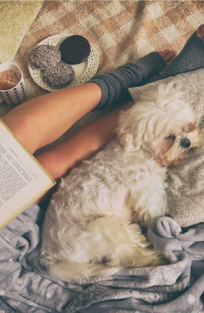Dog training lessons from the best fiction, illustrated by woman reading book with coffee and biscuits and white dog curled up
