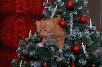 chat roux dans un sapin