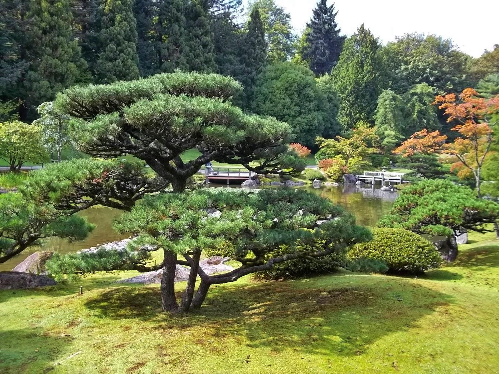 Urban Landscape Native Landscape Seattle Japanese Garden