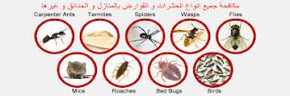 مكافحة النمل الابيض والصراصير بالمدينة المنورة