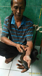 Memancing sidat di daerah Jogja