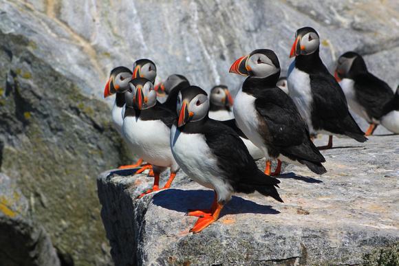 Güzelliğiyle Tüm Dünyayı Büyüleyen En Dünyanın En Güzel Kuşları - Deniz Papağanı - Kurgu Gücü