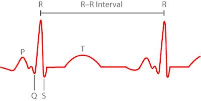 คลื่นหัวใจ และ R-R interval