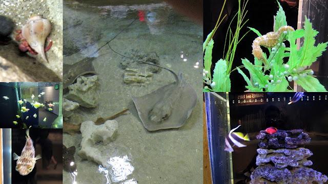 Catawaba Science Center Aquarium