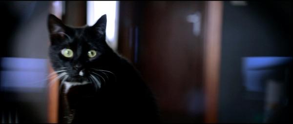sputnik cat