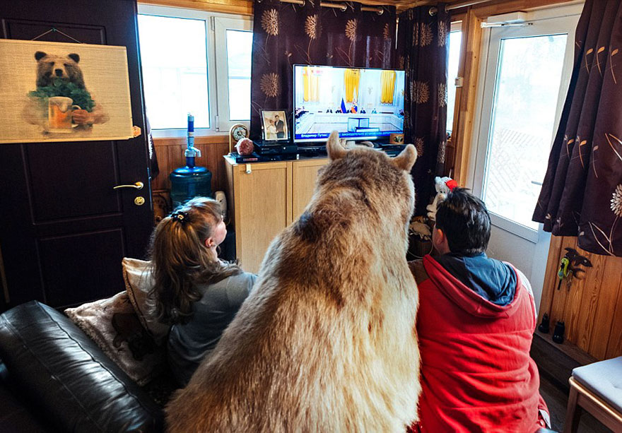 Russian Couple Adopted An Orphaned Bear 23 Years Ago, And They Still Live Together - But there's nothing like snuggling with his humans on a couch…