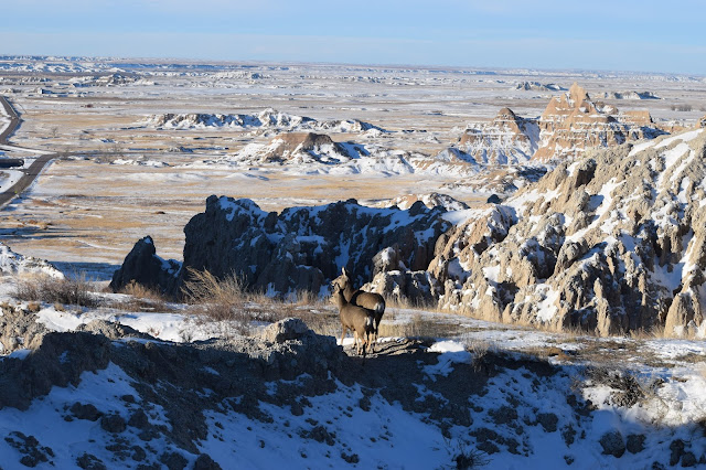 Badlands National Park, South Dakota, deer