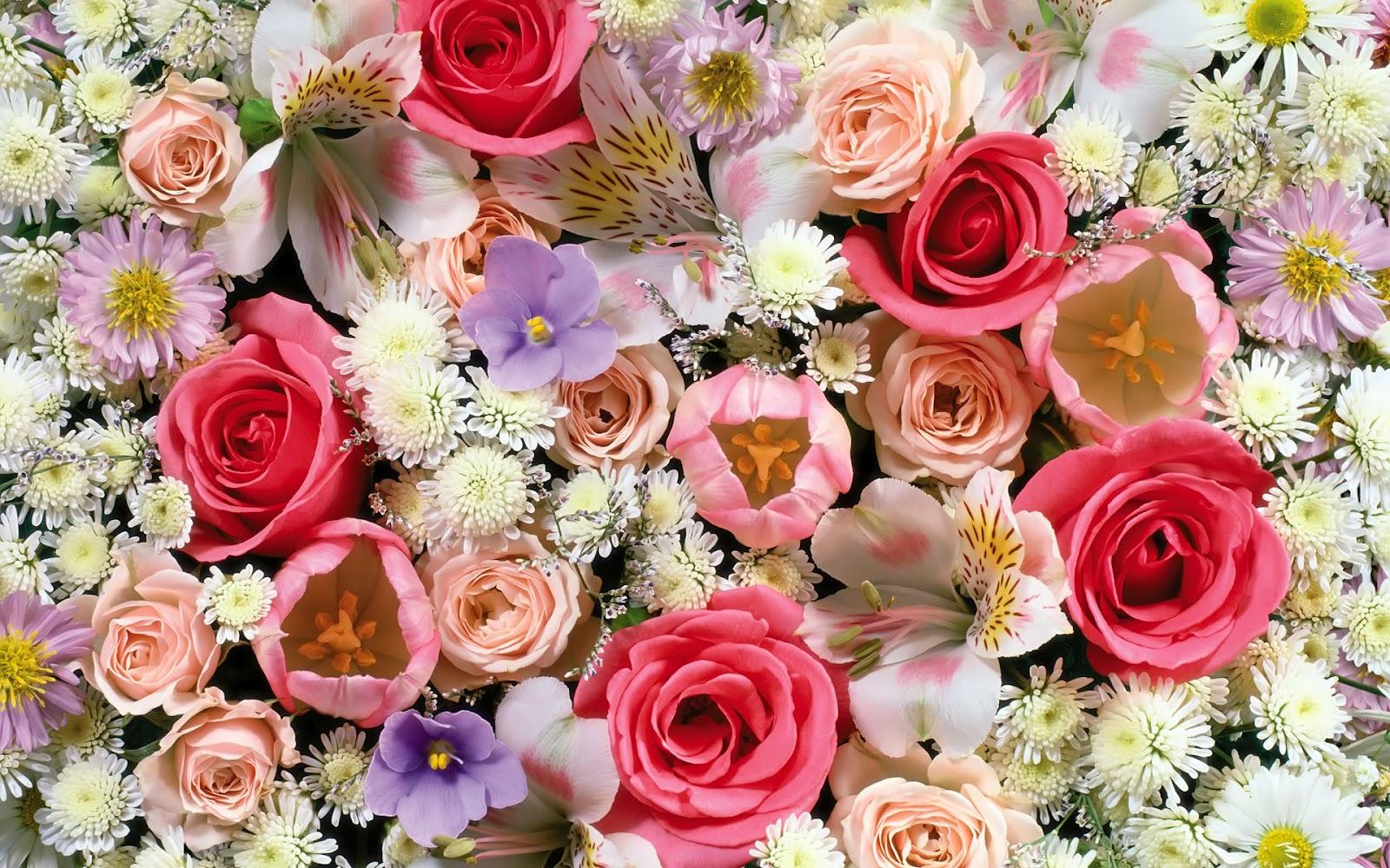 Holi 3d Wallpaper Name Flowers Wallpapers Flower Wallpaper Top Best Hd
