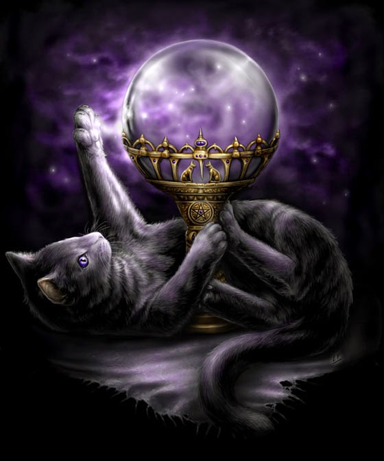 Cats and Witchcraft - The Witch Snitch