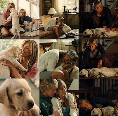 resenha do livro Marley e eu além do filme pessoas que amam cachorros raça lavrador cor do pelo amarelo labrador amarelo