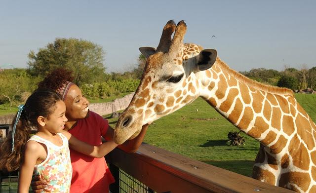 Safari en Busch Gardens en Tampa