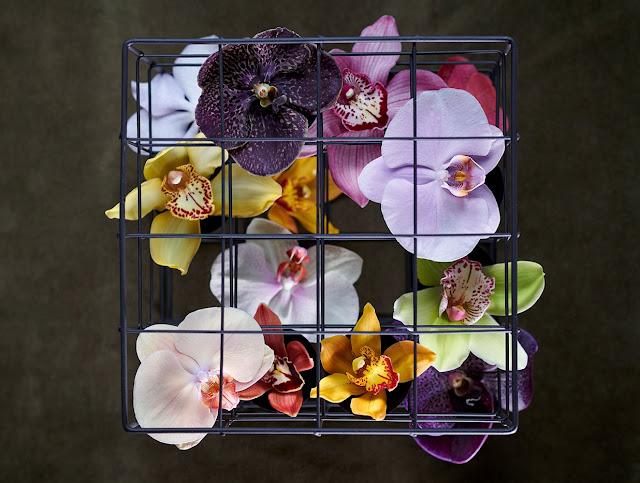 ¿Sabes cual era la flor favorita de Jackie Kennedy?