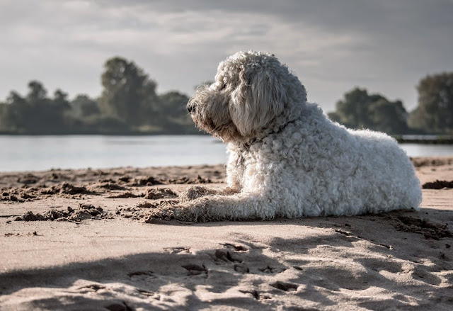 Pets%2BAbs%2Bblog - Summer Tips: How To Keep Your Dog Cool