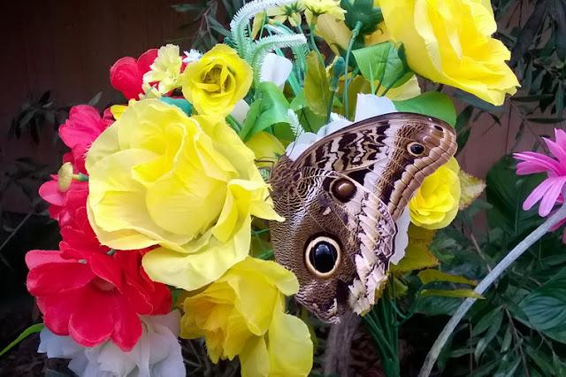 visitare casa farfalle bambini
