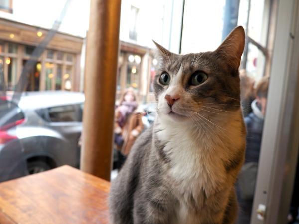 paris café des chats