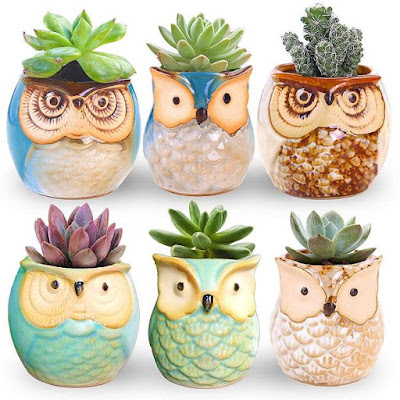 Mini Owl Planters