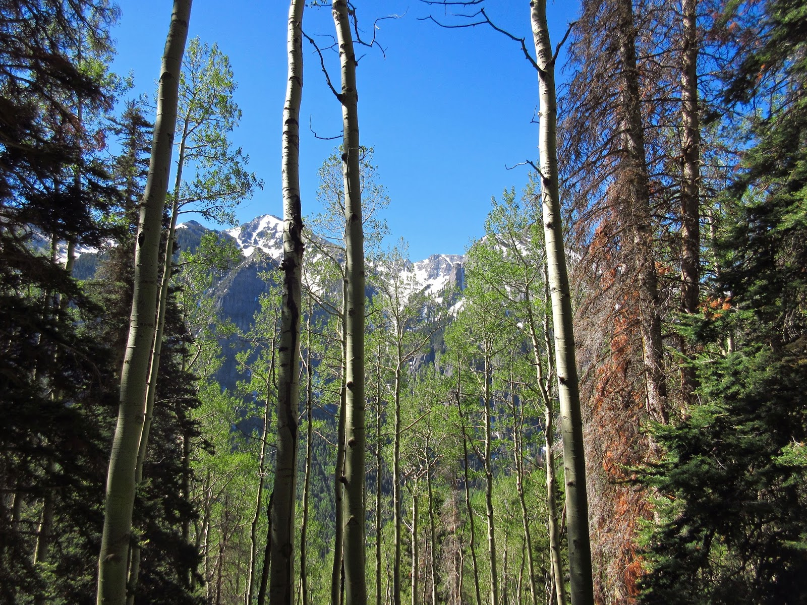 Box canyon blog more mountain spam a windy hike to ouray terrain aspenconifer woods hikest done in autumn just not feelin it mark oh the glacading links i put them on youtube for better clarity publicscrutiny Image collections