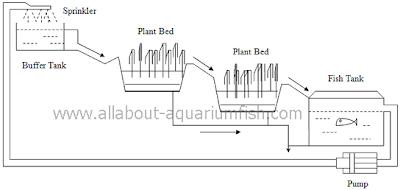 All About Aquarium Fish: Setting up Backyard Aquaponics System