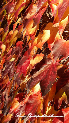 foglie, rosse, gialle, autunno, leaves, autumn, fall