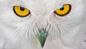 Burung Cara Merawat Burung Memelihara Burung Keistimewaan Burung Hantu