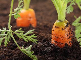 садовАЯ магия, огородная магия, заговоры, советы для вашего урожая,сад, огород, дача, урожай, народная магия для огорода, народная магия для сада, наговоры на растения, наговоры на семена, заговоры при посадке, заговоры на овощи, заговоры на фрукты, как заговорить огород, как заговорить комнатные растения, для дома, для сада, для огорода, лучшие заговоры, домашняя магия, растения, травы, огородникам, садлводам, как щаговорить урожай от порчи, как заговорить дачу от воров, как заговорить семена, заговоры на хороший урожай, лучшие заговоры на урожац, заговоры для огорода какие бывают,  http://deti.parafraz.space/
