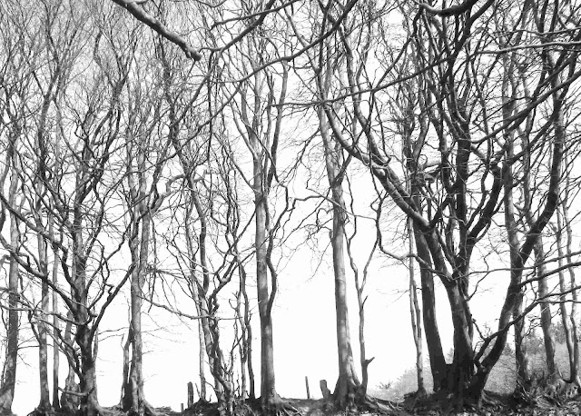 Trees on the Old Drove Road on Somerset Ridgeway in Black and White